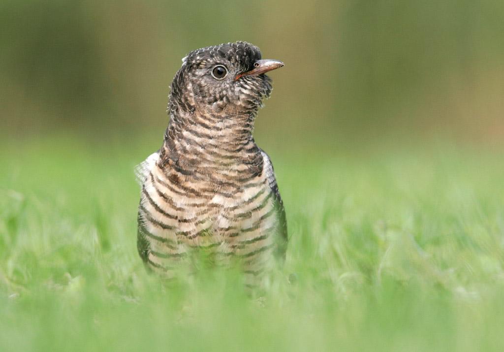 Maak zelf de mooiste vogelfoto's met het Handboek Vogelfotografie.