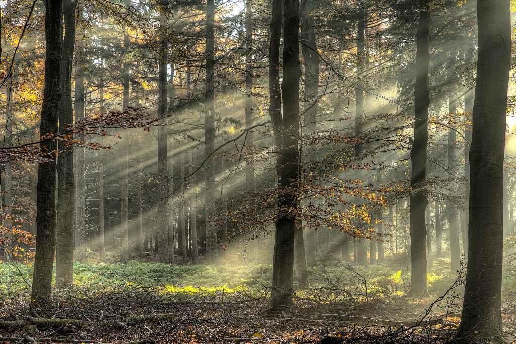 mist en zon in het bos