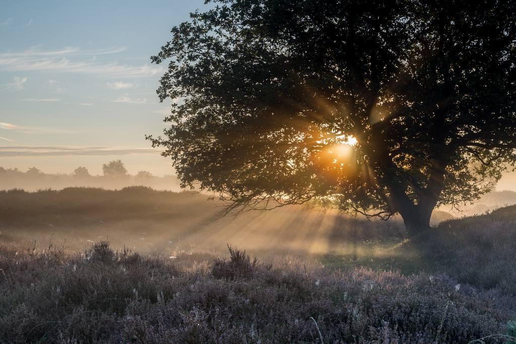 zonneharpen bij solitaire bomen