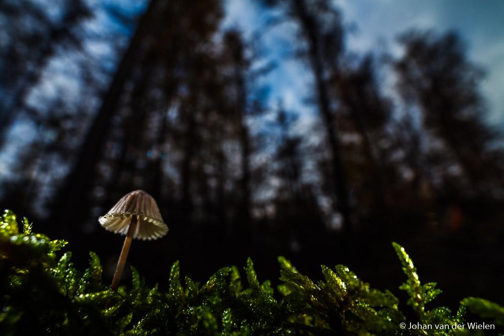 paddenstoel in landschap