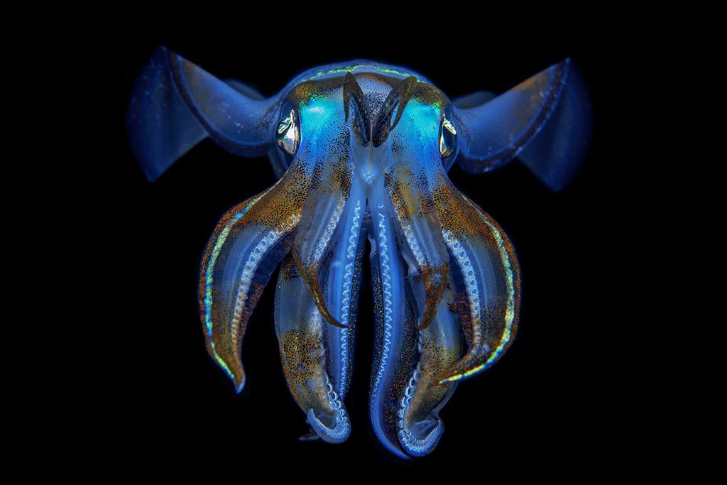 Squid. Luc Rooman